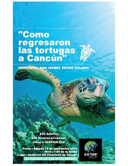 como regresan las tortugas a cancun