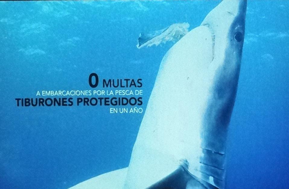 2012Oct7.MexicoPelagico -Friscione (51) crop persp.jpg