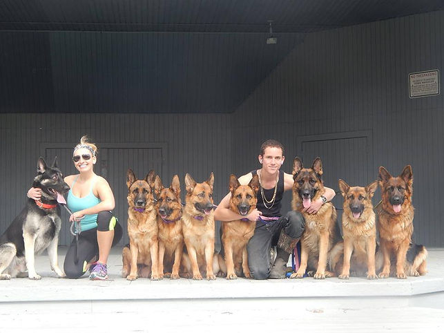 Augusto Deoliveira and his pack of german shepherds