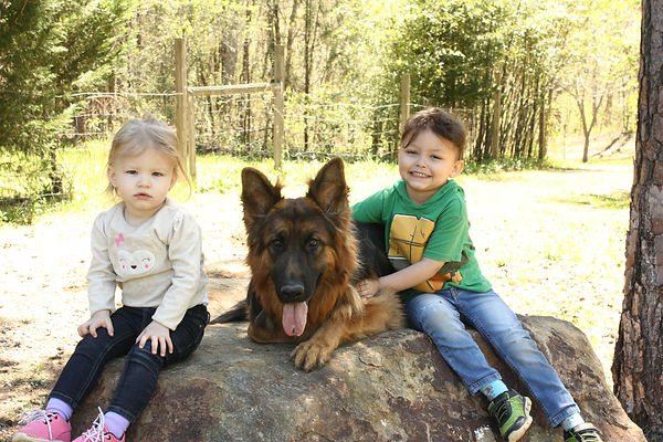 family dogs,German shepherd and kids