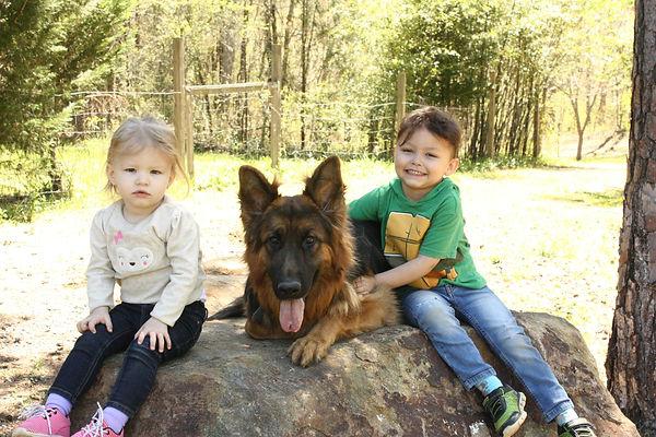 family dogs,German shepherd and kids