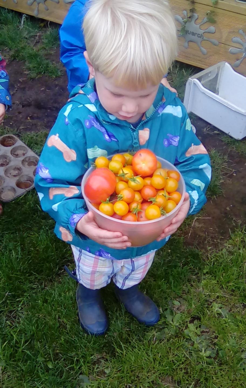 veg patch picking (11)