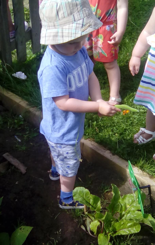 veg patch picking (3)
