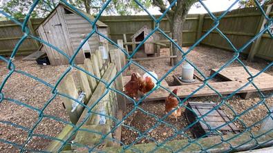 Chicken's Ryehills.jpg