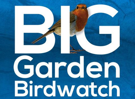Big Garden Watch Weekend!