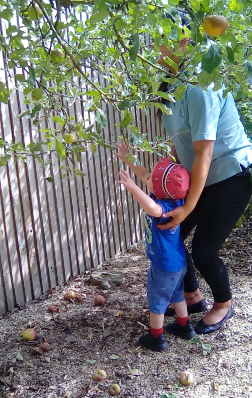 apple picking (3)