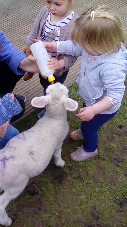 Lambs (8)