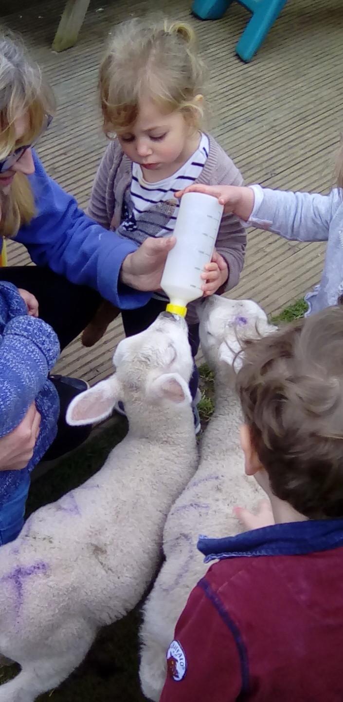 Lambs (7)