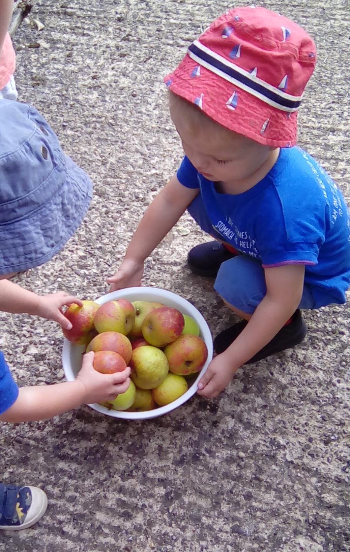 apple picking (1)