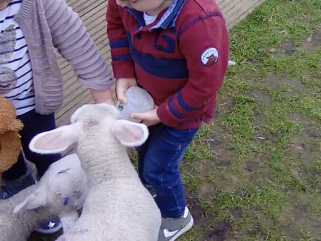 Lambs at Flore!