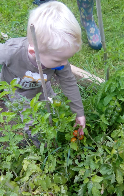 veg patch picking (9)