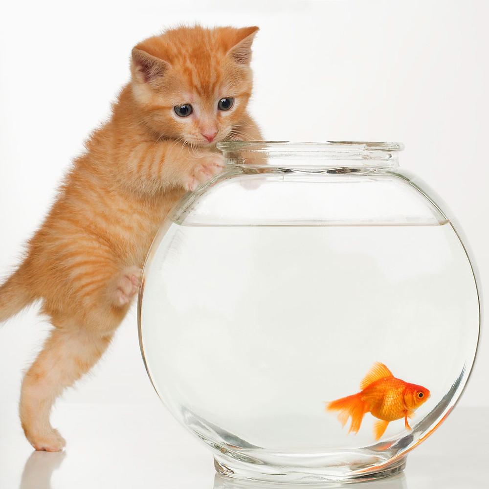 Tanto va la gatta al lardo ............