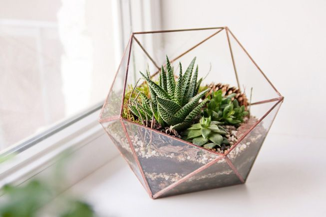 Glass-terrarium-succulents-window-sill;.jpg.653x0_q80_crop-smart