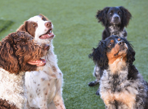 8 Reasons Daycare is Good for your Dog