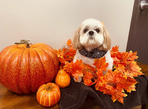 Halloween Anxiety Tips & Tricks for Dogs