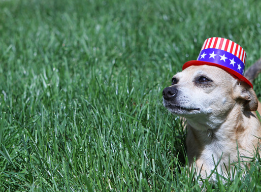 Independence Day Do's & Don'ts as a Pet Owner