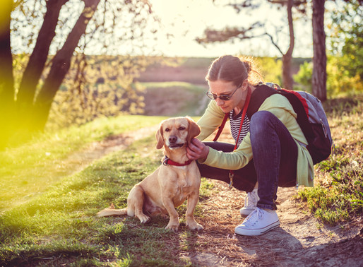 Flea & Tick Prevention: Does your dog really need it?