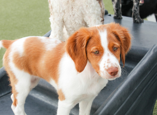 Should you get a Puppy?