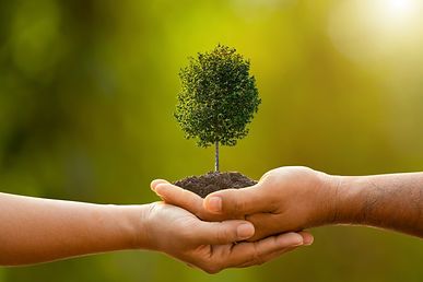 hand-two-people-holding-tree-soil-outdoo