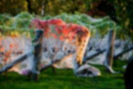 Chateau Waimarama autumn-1 WS.jpg