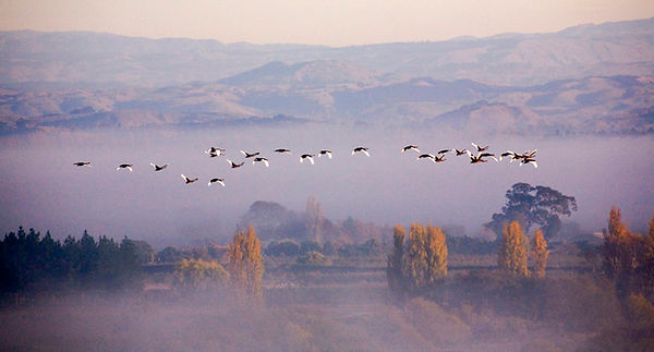 Birds TukiTuki-8 col WS.jpg