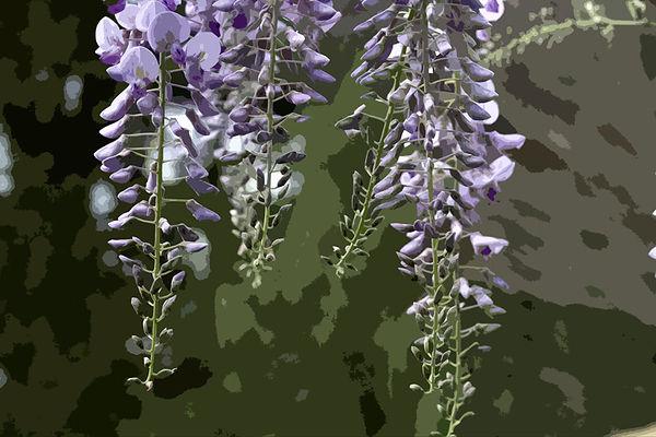 wisteria #2  cutout WS.jpg