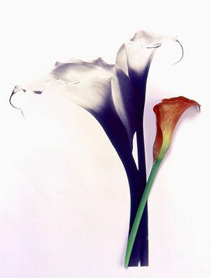 Red & Black lillies WS.jpg
