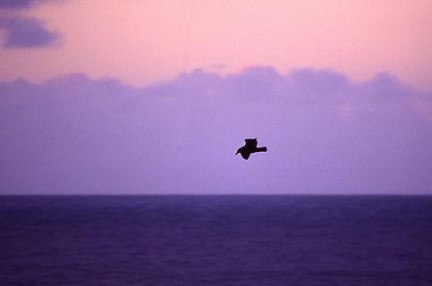 sunset flight.jpg