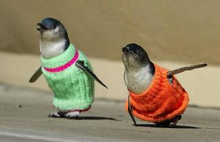 Свяжи свитер - спаси пингвина!