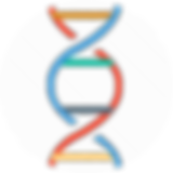 DNA Strand CORRECTED.png