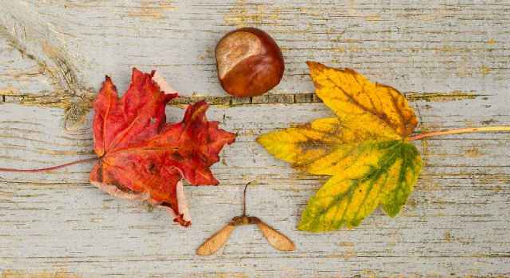 wood-fall-colors-maple