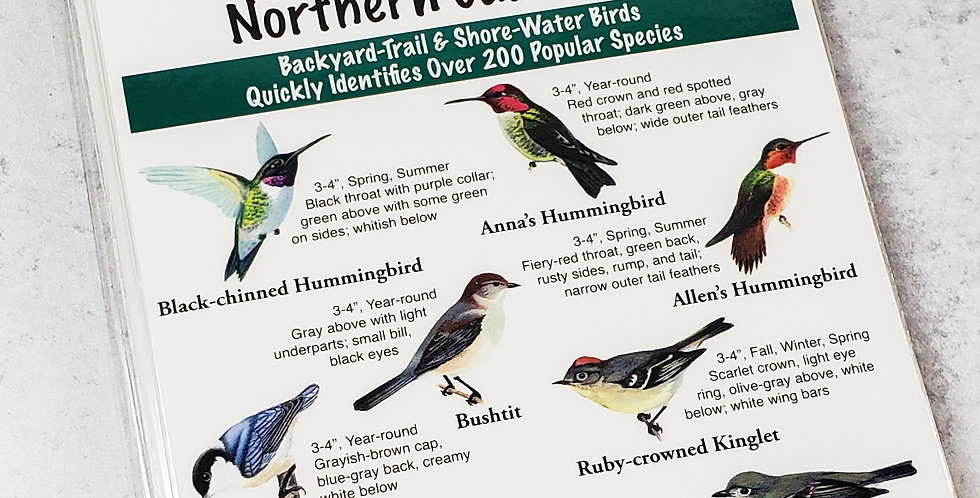 Local Birds Pocket Guide