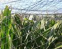 malla antipajaros, red antipajaros, protección árboles frutales
