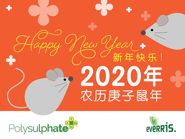 Chinese New Year card 2020