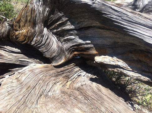 Photography, inside a fallen tree trunk