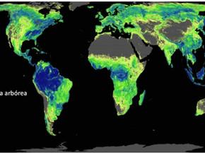 Científicos identifican cuántos árboles plantar y dónde plantarlos para detener la crisis climática