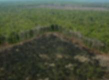 selva-quemada.jpg