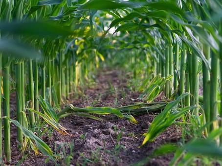 A Better Approach than Biodegradable Bioplastics