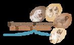 Logo RACP-grand-R.png
