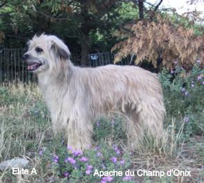 Apache du Champ d'Onix