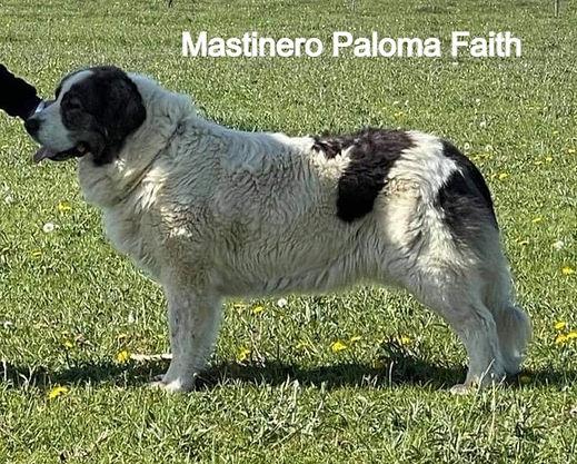 MastineroPalomaFaith_edited.jpg