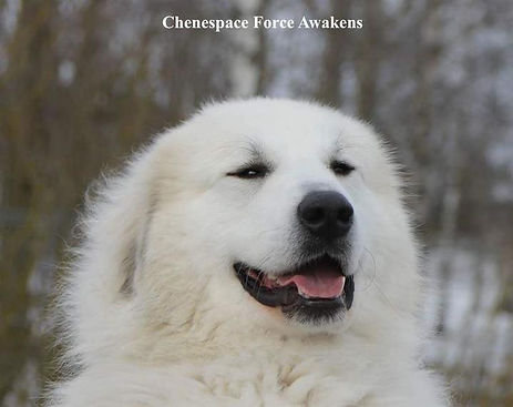 Chenespace Force Awakens_2_1.jpg