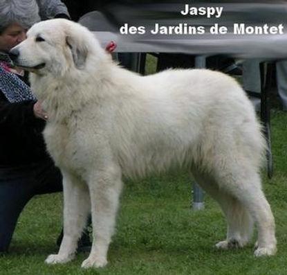 Jaspy-Bouhier_1.jpg