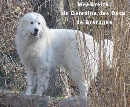 Mel-Breizh-Rouillon.jpg