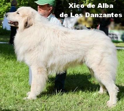 Xico-Irigoyen_1.jpg