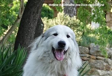 Molène du domaine des ducs de Bretagne (3)_edited.jpg