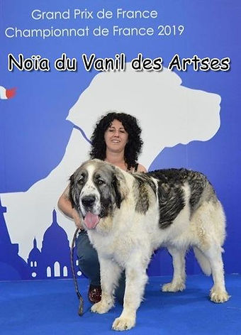 Noïa_du_Vanil_des_Artses.jpg