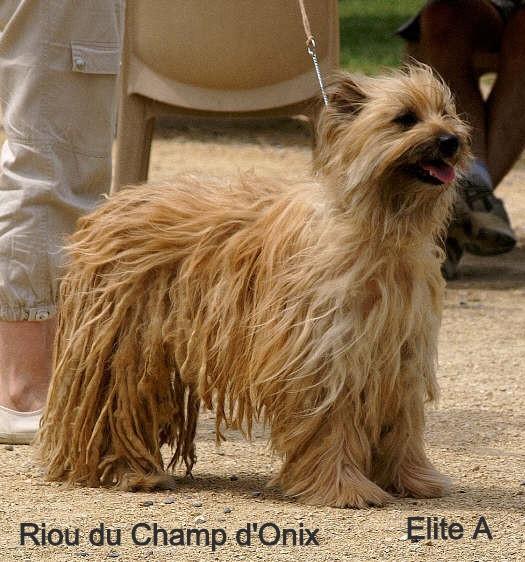 Ch. Riou du Champ d'Onix