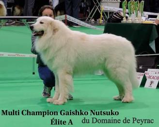 Gaishko Nutsuko du Domaine de Peyrac.jpg