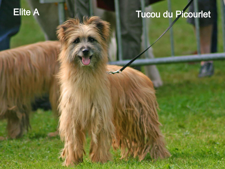 Tucou du Picourlet